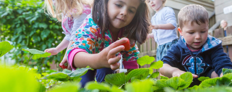 Children picking strawberries
